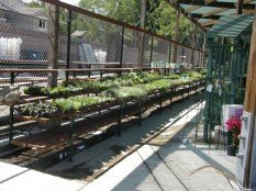A permeable area within a nursery also is designed to treat runoff