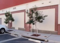 Slots in sidewalk curb send parking-lot runoff to Filterra (tm) flow-through planters.