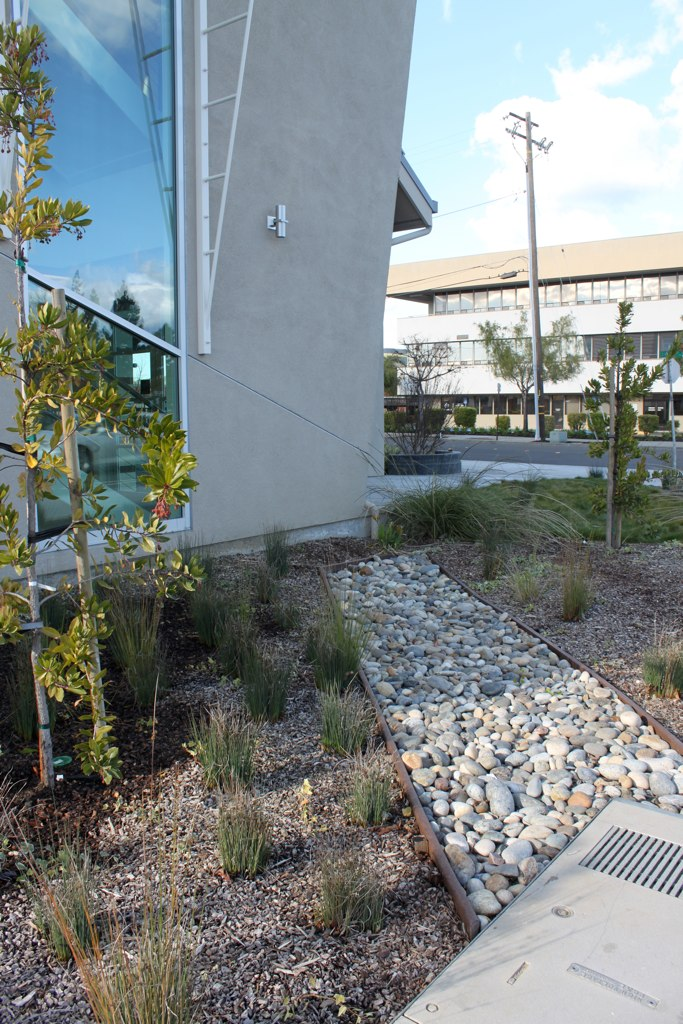 Medical building in Fremont treats runoff with formal swale