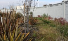 New Zealand Flax and nandina provide color in this shallow rain garden