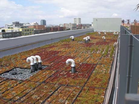 "Age Song, Emeryville, ""modular"" green roof with plants in trays"