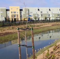 Restored Leona Creek at low-income housing project
