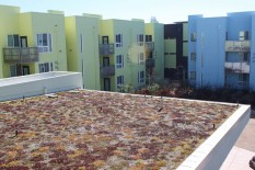 Low, drought-tolerant plants on both green roofs need little maintenance.