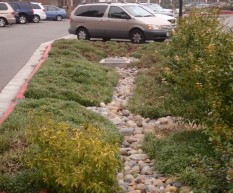 Runoff from large parking lot flows to swales with varied landscaping