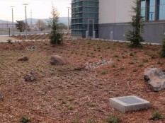 Rain garden with young redwoods, Pittsburg courthouse