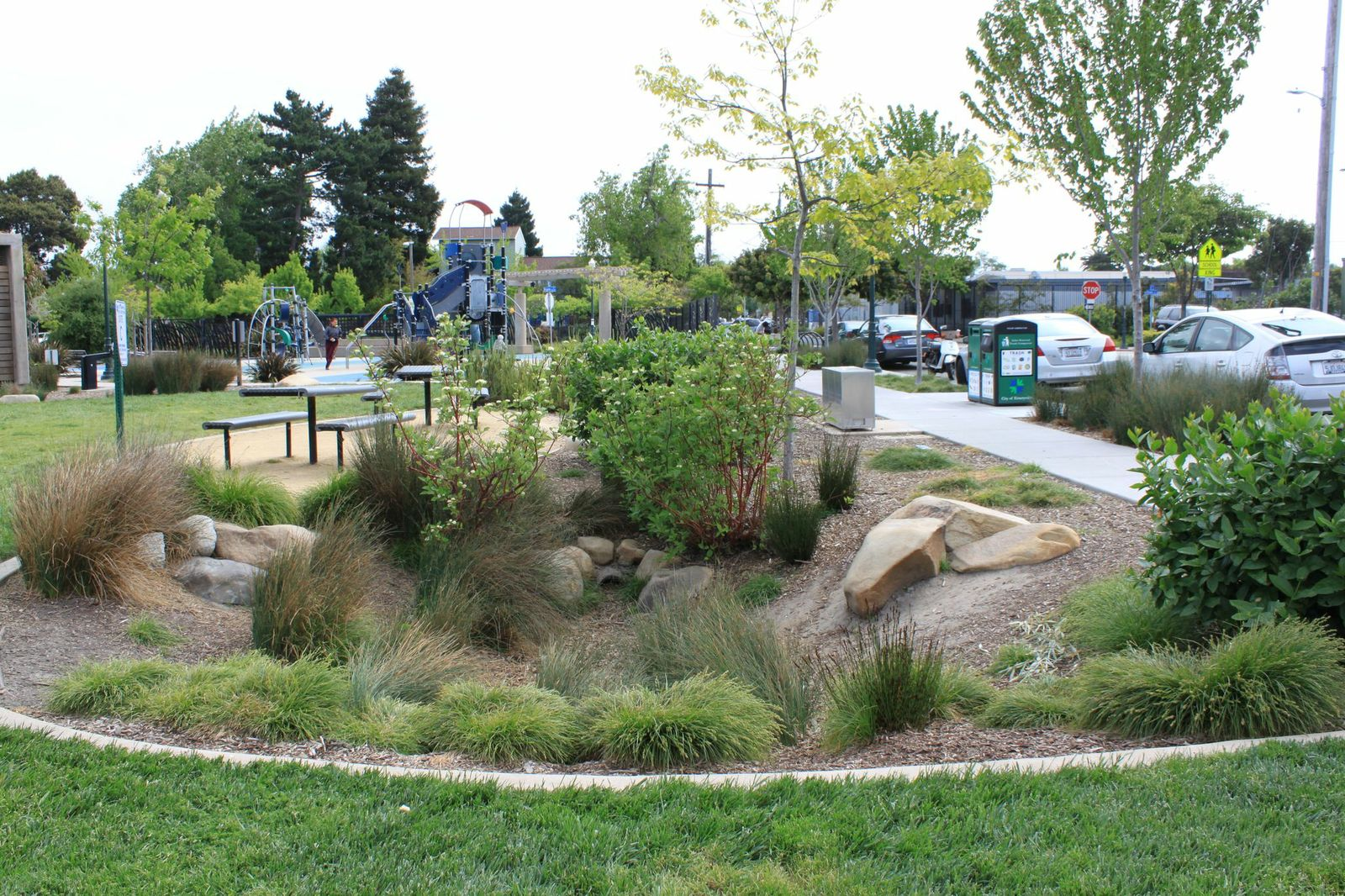 "Bioretention ""rain garden"" in Doyle Hollis Park, Emeryville"
