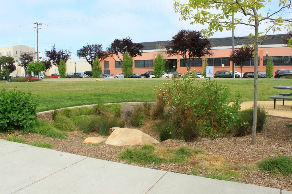 Bioretention rain garden, Doyle Hollis Park, Emeryville