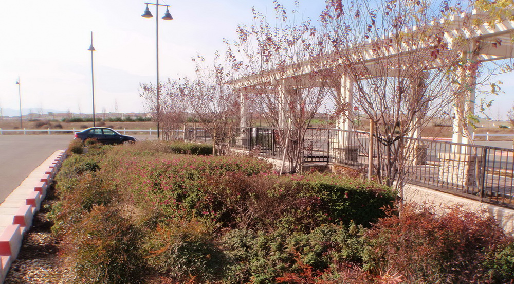 Arbor and plantings in runoff basin at JC Penney store, Antioch