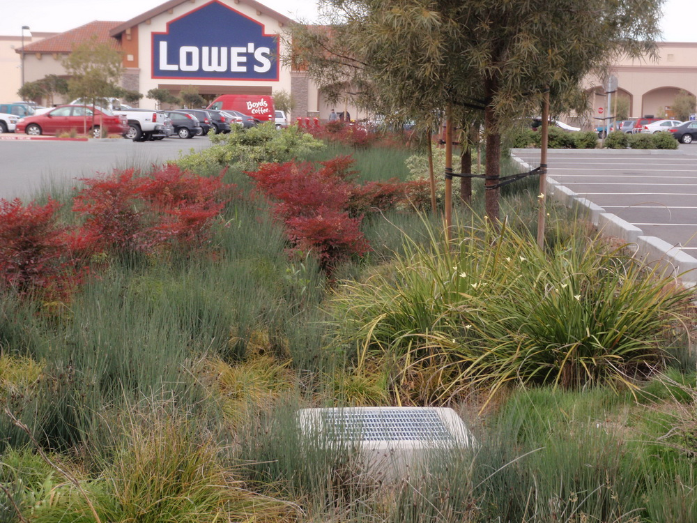 Colorful, drought-tolerant plantings in rain garden