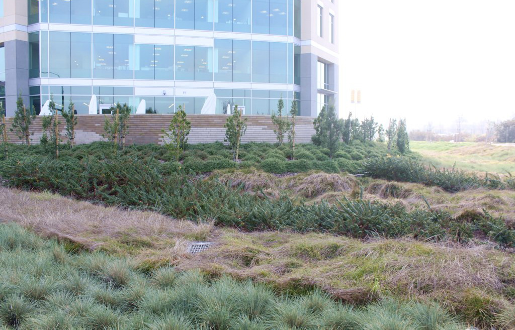 Large rain garden planted with bands of differently-hued vegetation