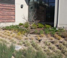 Inlets and drain in bioretention area, Walnut Creek Library