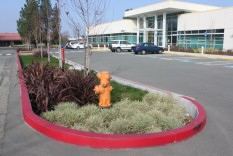 Deep planted basin retains parking-lot runoff