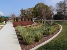 Rain garden from parking lot end, showing street and outdoor lunch area
