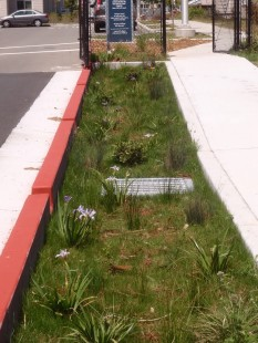 Rain Garden captures street runoff that would otherwise flow to Codornices Creek.