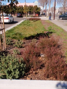 A swale next to busy San Pablo Avenue treats runoff from the parking lot.
