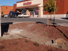 2011 construction along San Pablo shows plumbing in bioretention areas