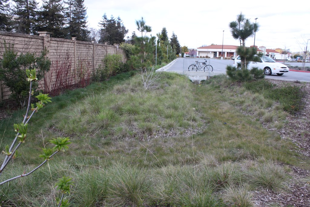 Large corner rain garden with swales, Ardenwood Park & Ride lot.