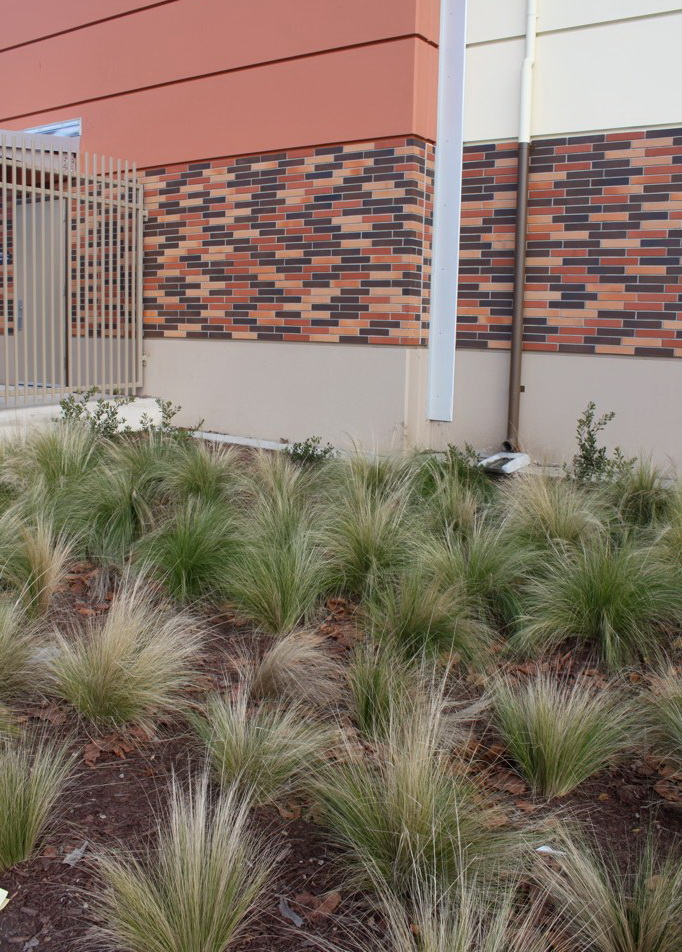 Runoff to landscaping, San Leandro High School